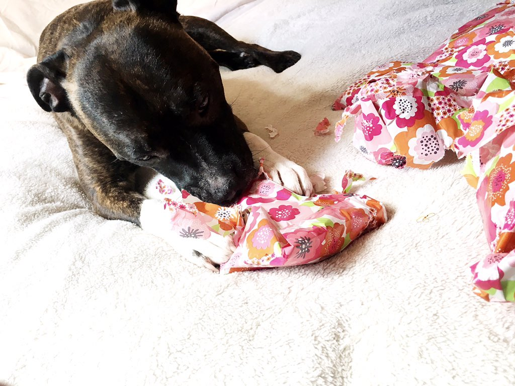 Dog unwrapping Presents